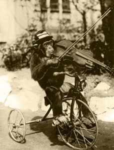 Carin_Violin_Chimp
