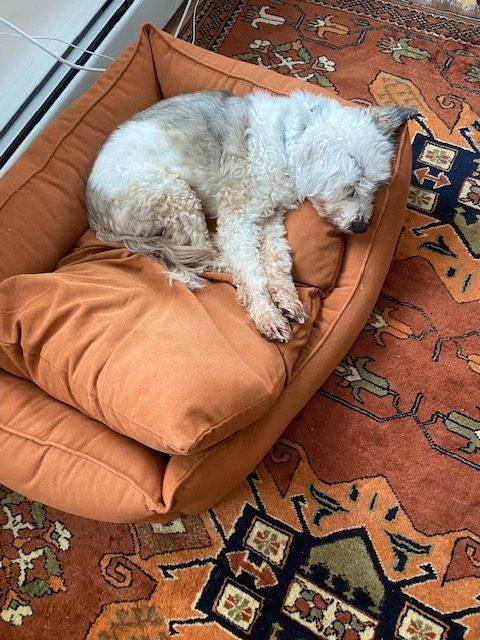 Lois Lowry's dog, Alfie