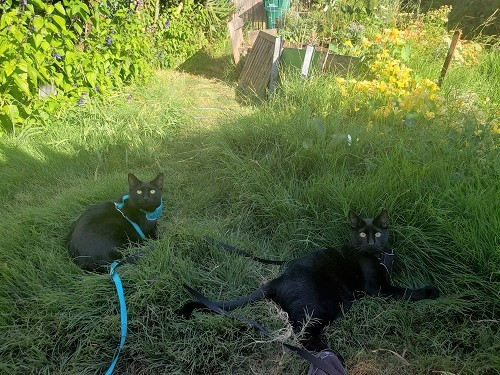 Alex Gino's cats Thunder and Lightning in the their garden.