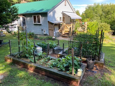 A picture of author Joseph Bruchac's vegetable garden.