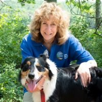 Picture of Sy in blue shirt with green leaves in background and black and white collie dog.