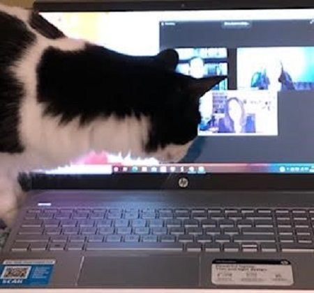 Author Betsy Uhrig's cat Max attending a Zoom meeting.