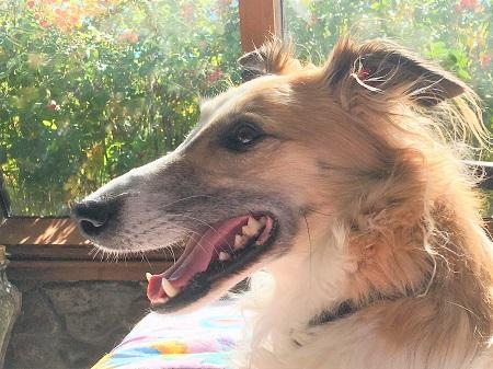 Author Christiane Andrews' second dog.