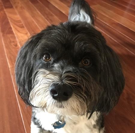 Author Rajani LaRocca's dog.