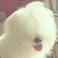 Author Arnee Flores's dog.