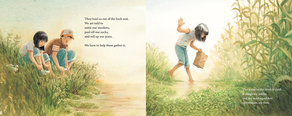 An interior spread from Watercress, written by Andrea Wang and illustrated by Jason chin, showing a girl and her brother collecting watercress in a ditch.
