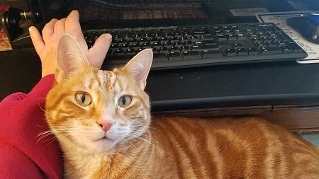 Author Donna Galanti's cat.