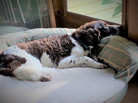 Joyce Sidman's dog, sleeping.