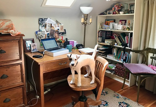 Author Caroline Adderson's study with her dog standing on her desk chair.